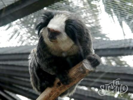 Маленькая обезьянка в Лоро-парке