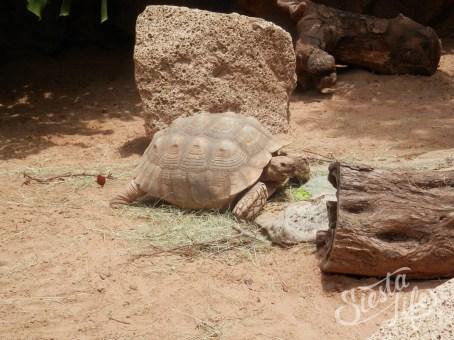 Лоро-парк: большая черепаха