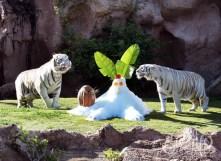 тигры в Лоро-парке