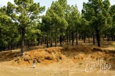 Павел стоит у подножия горы, заросшей канарской сосной