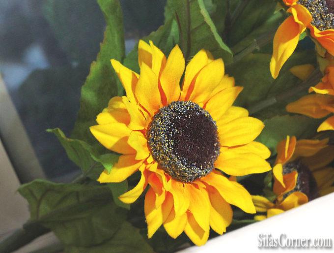 spring flower sunflower