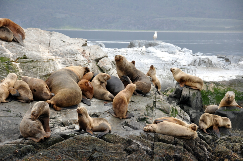 Siga na Viagem - Passeio pelo Canal de Beagle em Ushuaia - Colônia de lobo marinho.