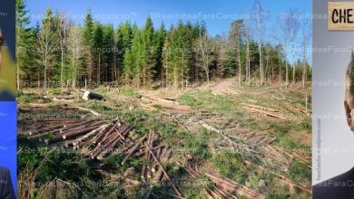 Photo of PSD-ALDE DĂ LIBER LA DEFRIȘAT: Guvernul oprește accesul la aplicația de monitorizare a tăierilor de păduri