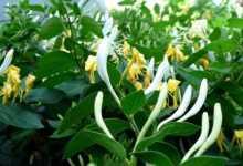Photo of Palma Maicii Domnului, planta care ne vindecă de bolile trupești și sufletești