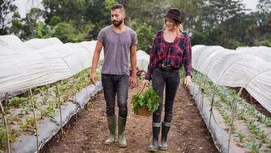 Photo of Tinerii care vor să devină fermieri pot primi 50 de hectare de la stat, în concesiune.