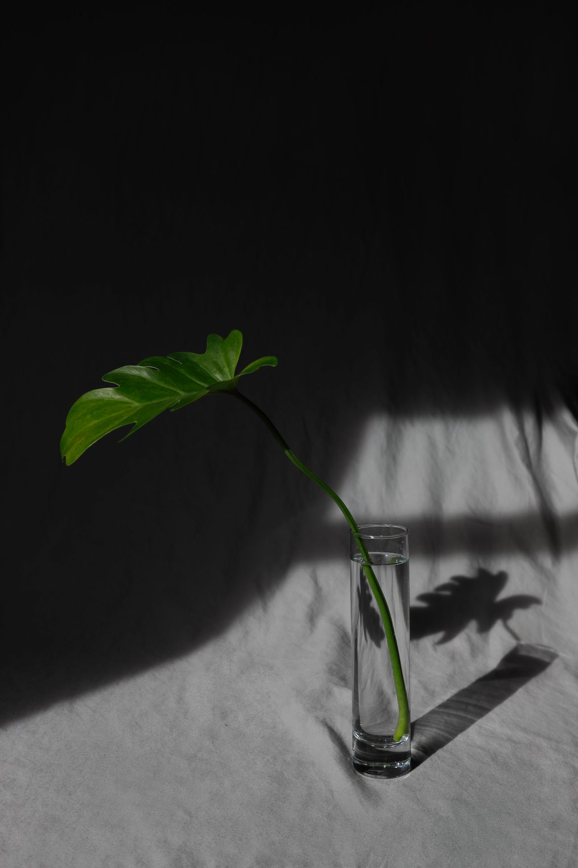 still life plant leaf xanandu harsh light shadows