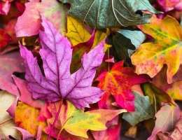 How To Pack for an Autumn Break