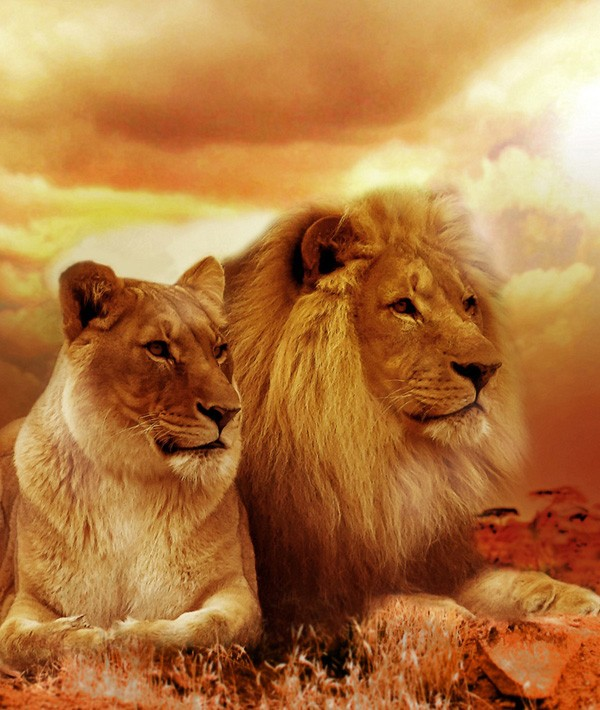 Symbolic Meaning Of Lions And Lion Totem Meaning On Whats Your Sign
