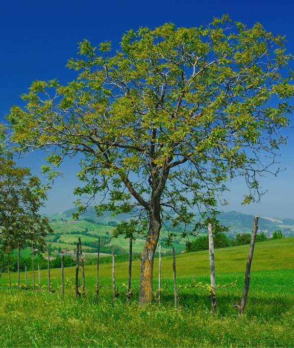 symbolic meaning of seasons on whatsyoursigncom