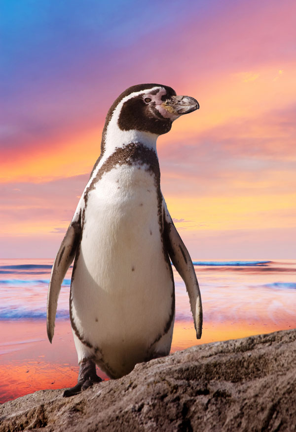 Symbolic Penguin Facts And Penguin Meaning On Whats Your Sign