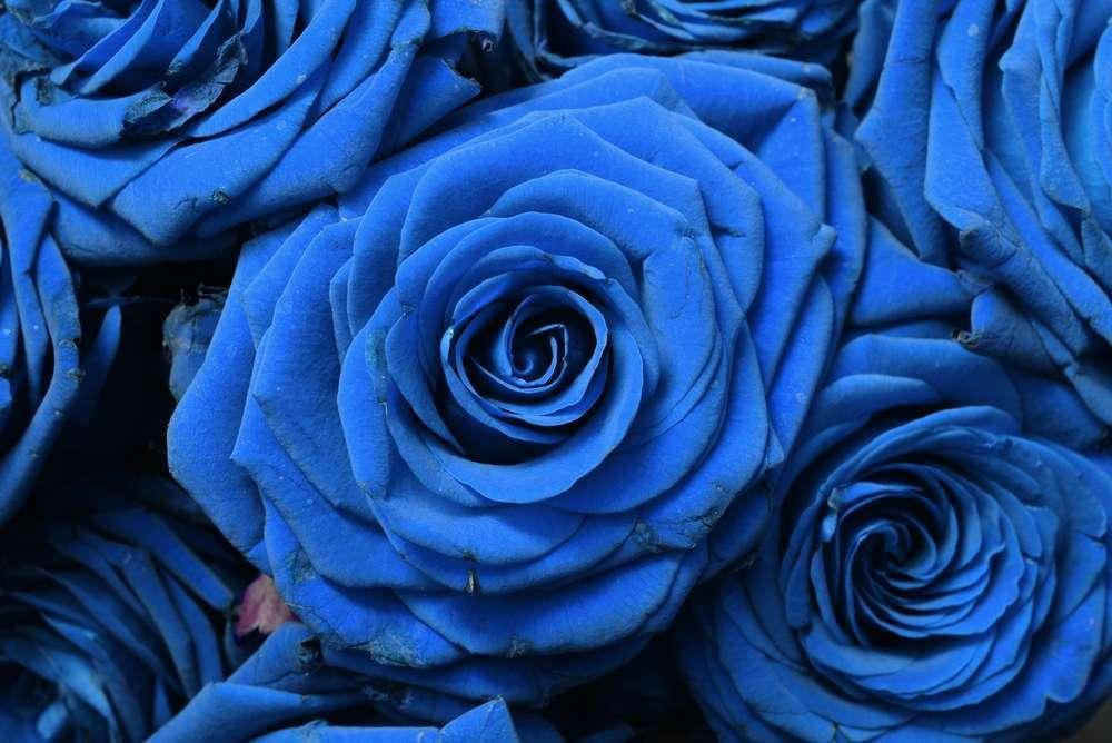 Significado De Las Rosas Azules Significadodelasrosasnet