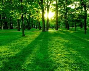 color verde en la naturaleza
