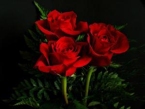 rojo el color del amor
