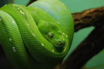 que-significa-sonar-serpiente-verde