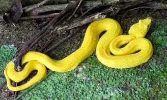 que-significa-sonar-serpiente-negra