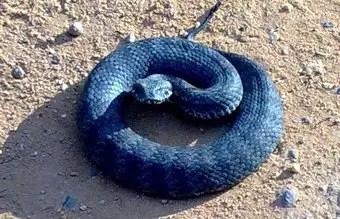 que-significa-sonar-serpiente-culebra-color-azul