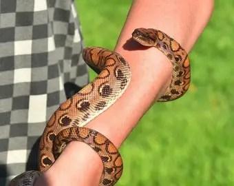 que-significa-sonar-serpiente-me-muerde-los-brazos