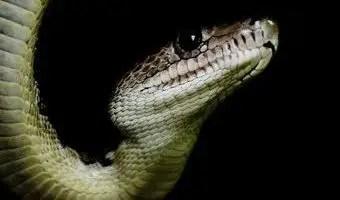 significa-sonar-matar-serpiente