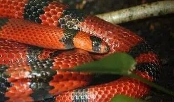 que-significa-sonar-con-serpiente-negra-y-roja