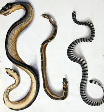 que-significa-sonar-serpientes-diferentes-tamanos-y-colores
