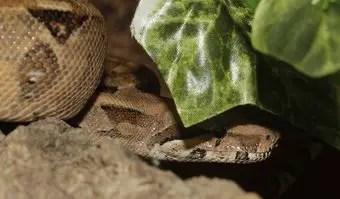 que-significa-sonar-con-serpiente-que-se-esconde