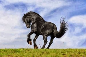 ▷ Sonhar com cavalo preto【IMPERDÍVEL】