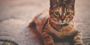 Você Sabia Que Gatos São Mestres Espirituais? Veja Como Se Conectar Espiritualmente Com Um Gato