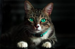 ▷ Gatos Significado Espiritual (Tudo O'que Você Precisa Saber)