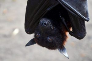 ▷ Descubra o Significado Do Morcego De Acordo Com o Espiritismo