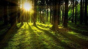 Significado de Soñar con la Luz del Sol