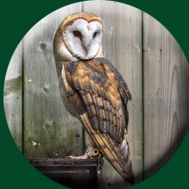 barn-owl-fence