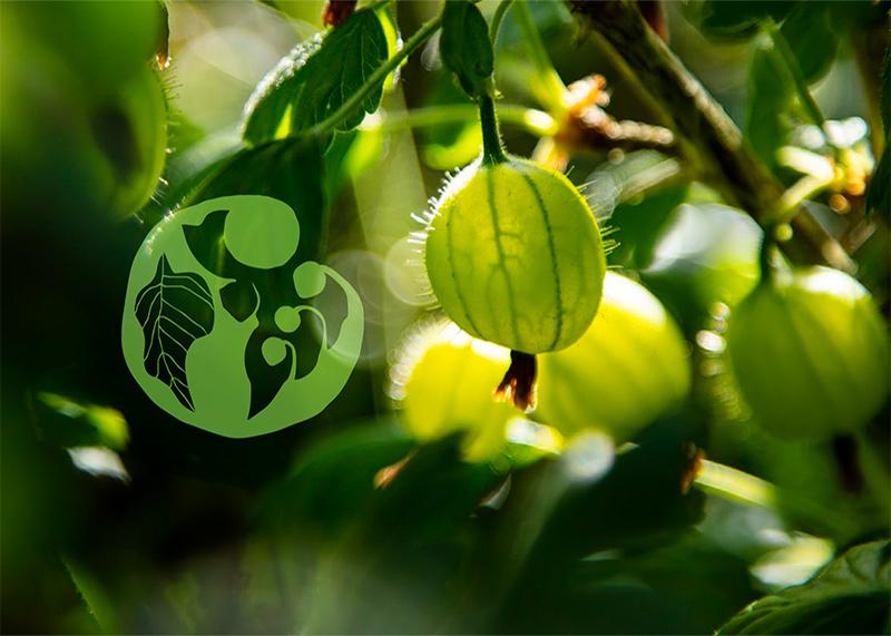 nyt logodesign Samsø Bær