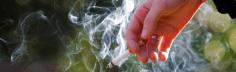 منظمة الصحة العالمية. التبغ يضر أيضا بالبيئة !