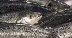 تعرف على فوائد السمك البحري