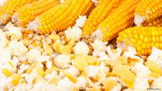 مقرمشات الذرة كبديل للخبز المقرمش