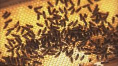 هواء خلية النحل- علاج مبتكر لأمراض الجهاز التنفسي