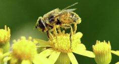فصل الربيع و حساسية حبوب اللقاح
