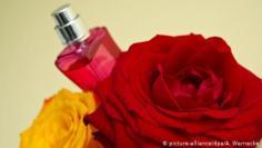 زيت الورد.. المفضل لدى النساء