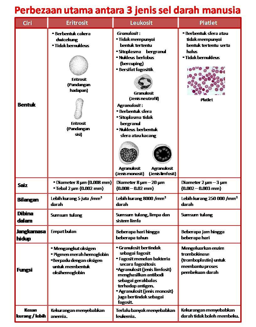 Jenis Darah Dan Fungsinya : jenis, darah, fungsinya, Darah, Manusia, Fungsinya, Sihatmasayu