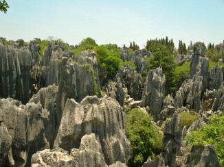 Stone Forrest