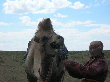 An angry camel