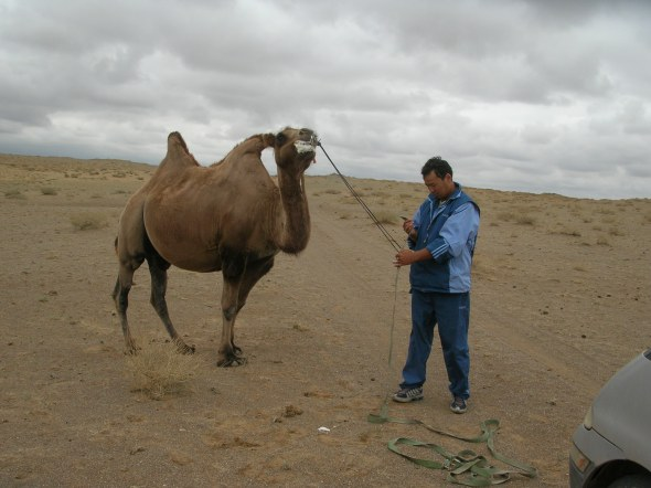 """""""Yeah, I catch camel,"""" Future said. """"No way,"""" I said. """"I is professional. I know it camels,"""" he said. """"This fuming camel was about to become our personal tow truck."""