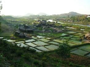 Rice fields - Hampi