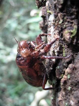 Uganda, bugs