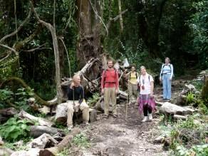 Hiking Mt Cameroon