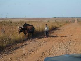 working hard, Angola