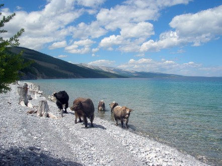 """Ignoring our squabbling, Baagii told us more about the beautiful lake. """"This lake holds seventy percent of Mongolia's fresh water."""
