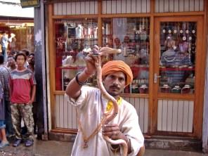 Snake charmer in Kathmandu, Nepal. Backpacks and Bra Straps