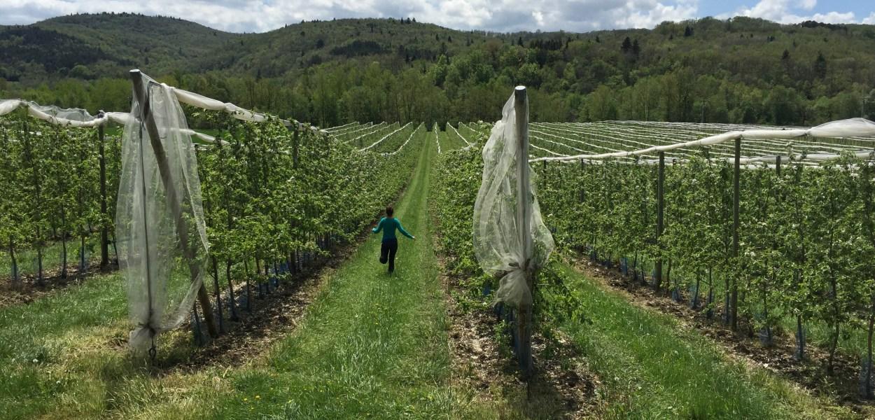 France, vineyards