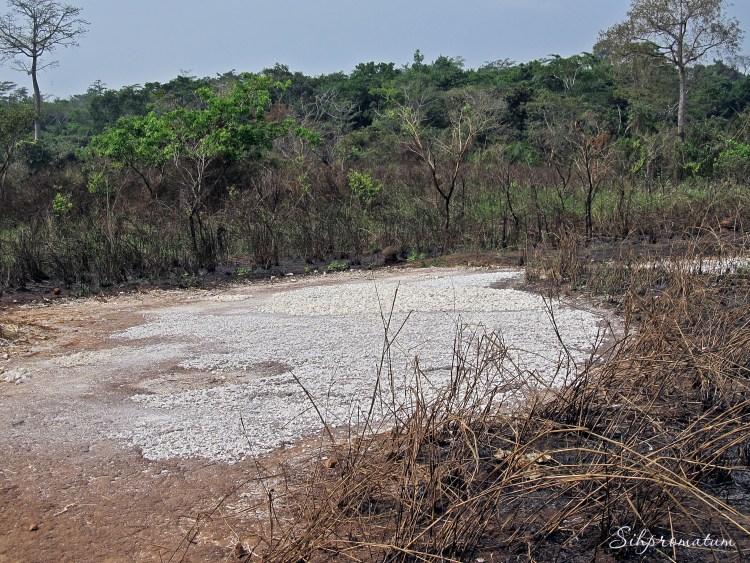 A dried up river near the Camaroon border., CAR